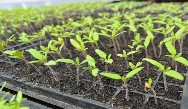 Engineering Vegetables Gardening
